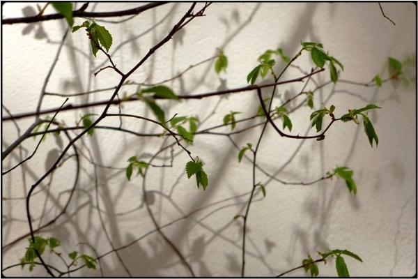 leaf entangling 2 by FabioKeiner