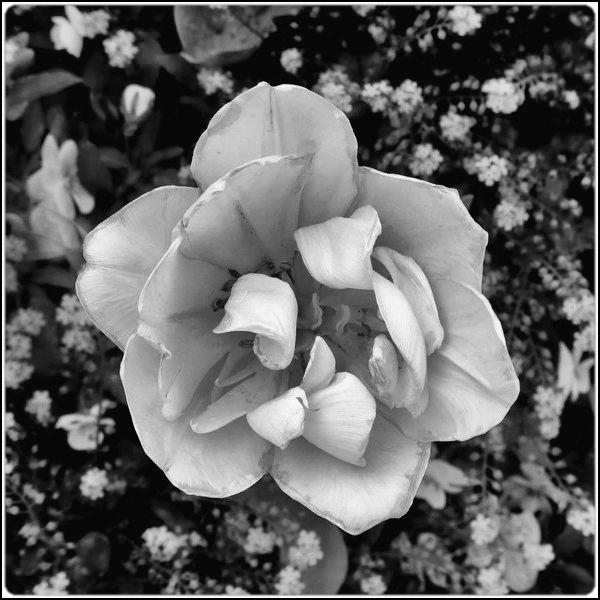 white on black by FabioKeiner