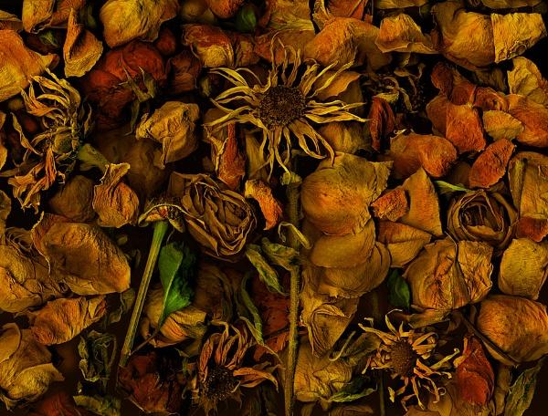 Autumn jungle by mtuyb