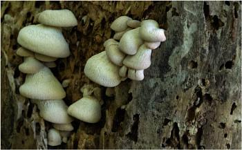 Fungi Clusters