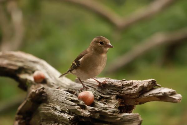 Wee bird by memphis