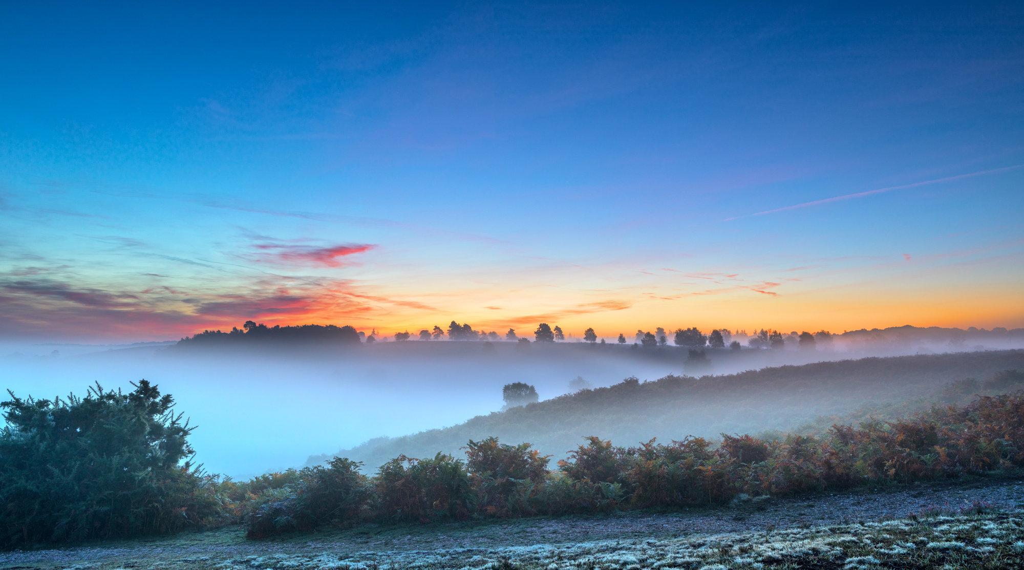 Misty Common