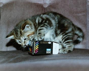 The Film Carton.