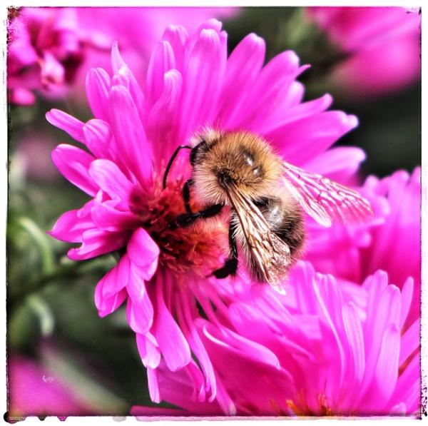 Bee happy by dukes_jewel