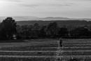 Across the fields by philstan