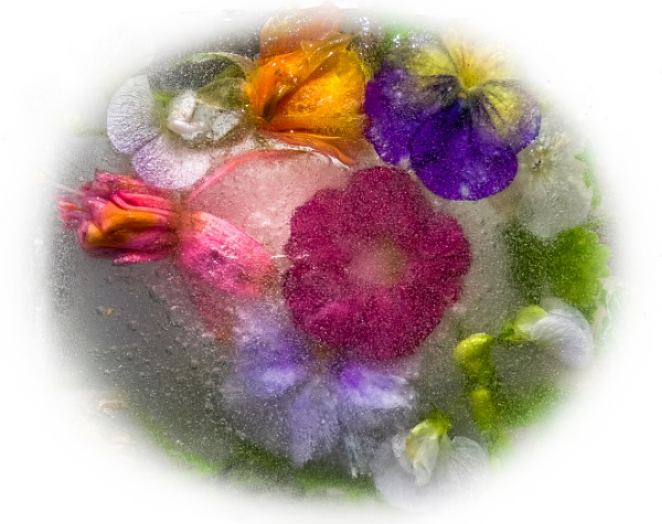 Flowers in Ice by Aveeno