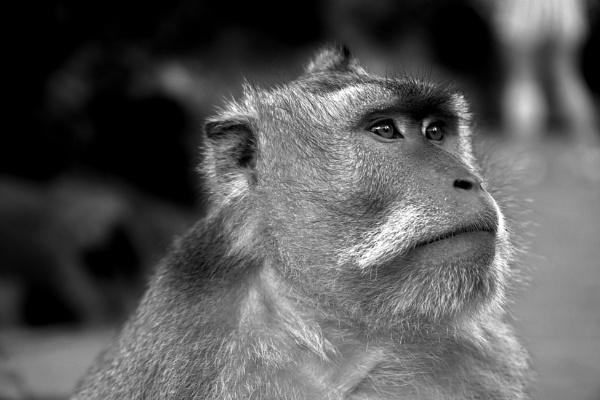 Monkey by tincanstorm