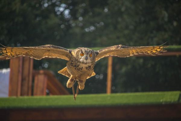 Eagle Owl by mdavisba