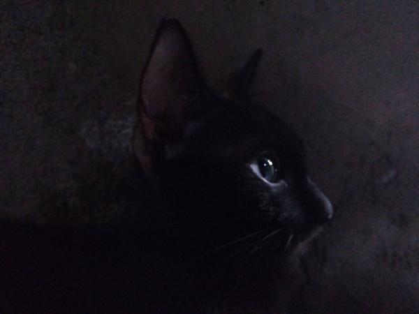 In the Dark by jkrix