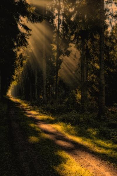 Rays by Leikon