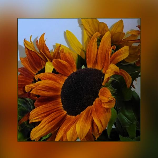 Sunny Days by Joline
