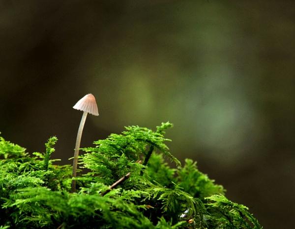 Woodland Mushroom by viscostatic