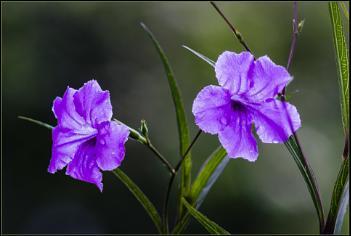 Garden blooms