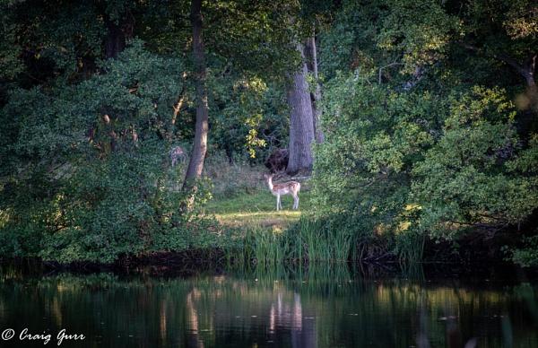 Bambi by Craig75