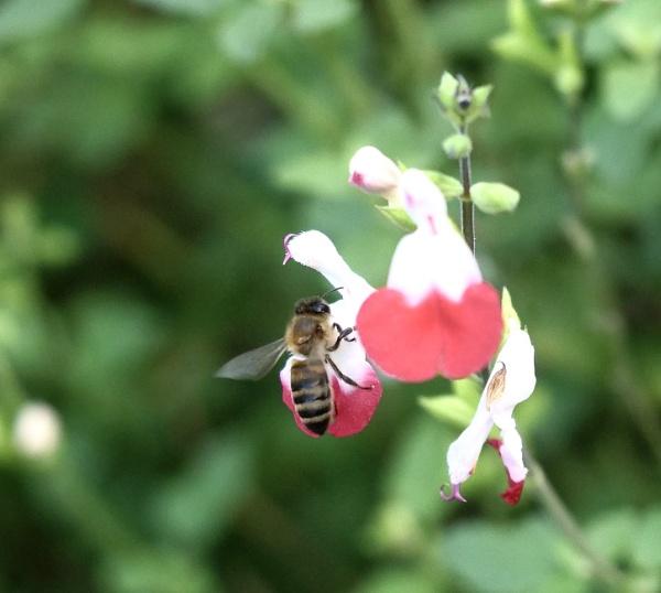 just buzzin by sparrowhawk