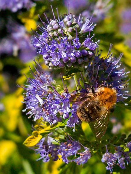 Mr Pollinator by Carabosse
