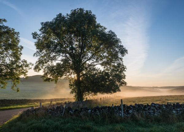 Sun, Mist and a Tree by jasonrwl