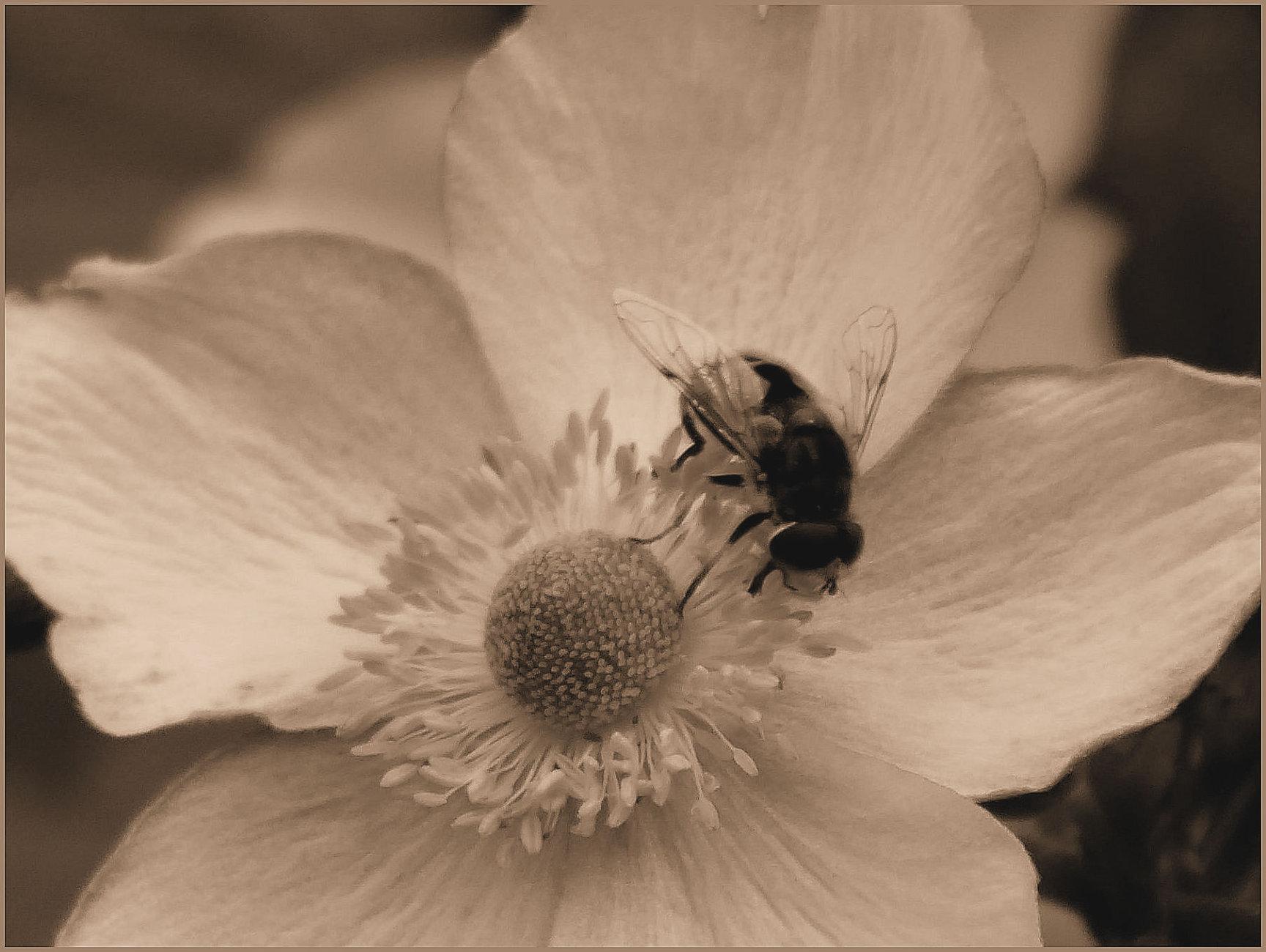 Pollen Keeper