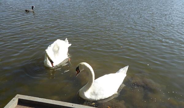 Standoff at Langold Lake. by Gypsyman