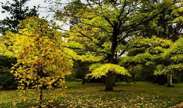 autumn  colour by derekp