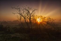 Sunrise through the bushes