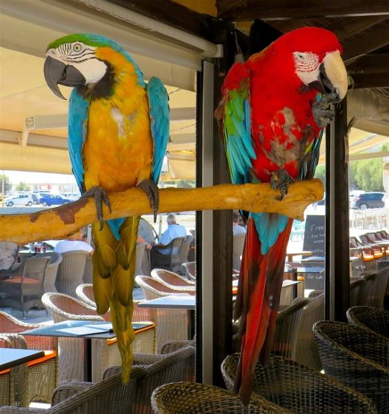 Two vicious birds by ddolfelin