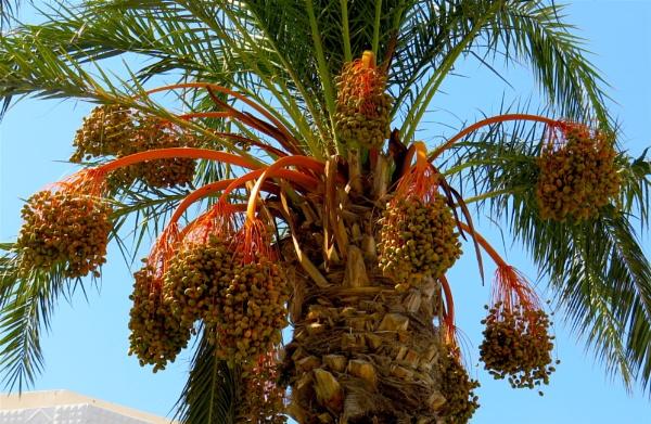 Pine nuts by ddolfelin