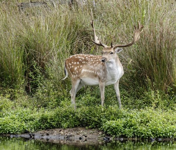 \'O\' Deer 2 by doverpic