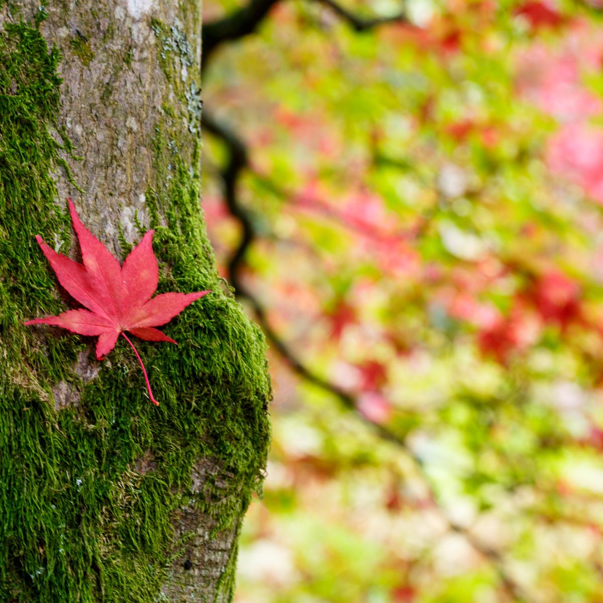 A leaf...