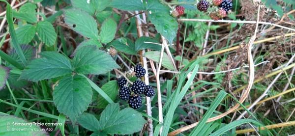The Last Berries by carol01