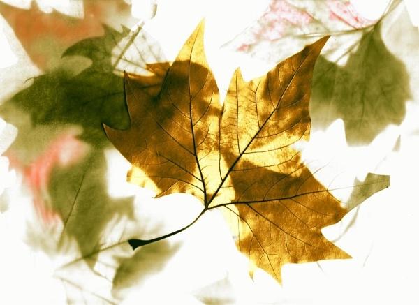 Autumn wind by mtuyb
