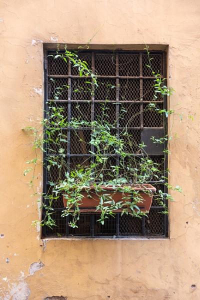 Window and plant by rninov