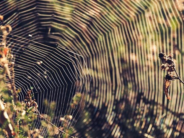 Web by aldrahn