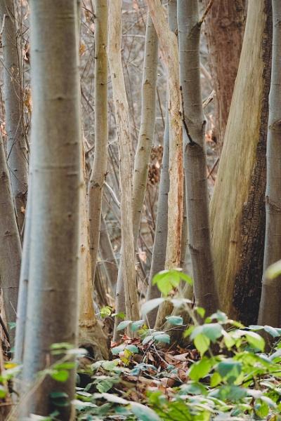 Trees by aldrahn