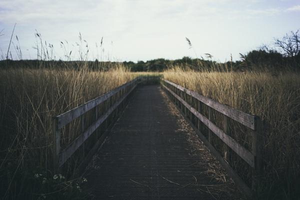 The bridge by aldrahn