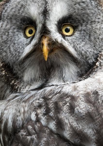Scottish owl by BiffoClick