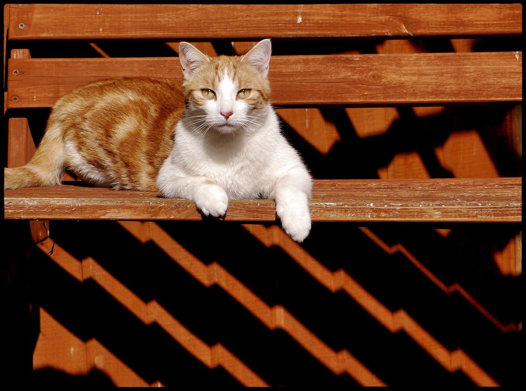 Art Deco Cat Is Watching.