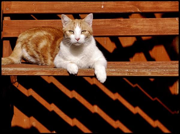 Art Deco Cat Is Watching. by ThePixelator