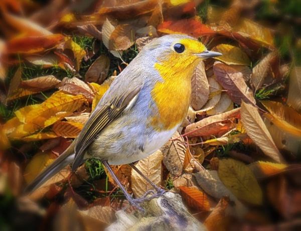 "\""Autumn Hues\"". by adrianedwa"