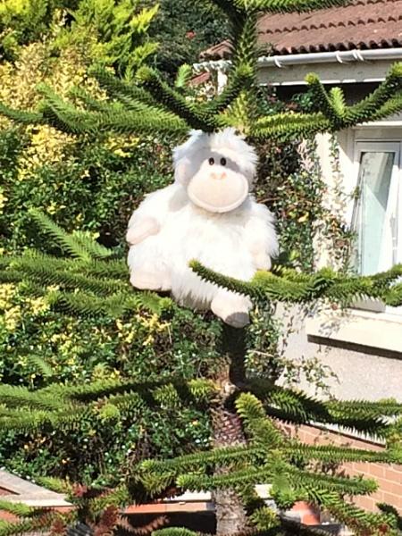 # White Gorilla by davyskid