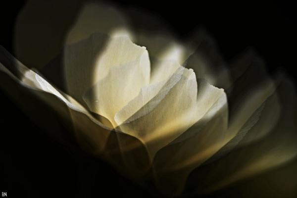 Light Unfolding by HarmanNielsen