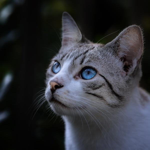 Feral Cat by DBoardman