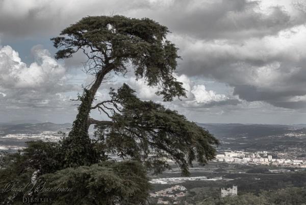 The tree @ sintra-pena-palace by DBoardman