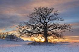 Beautiful tree and winter sunset