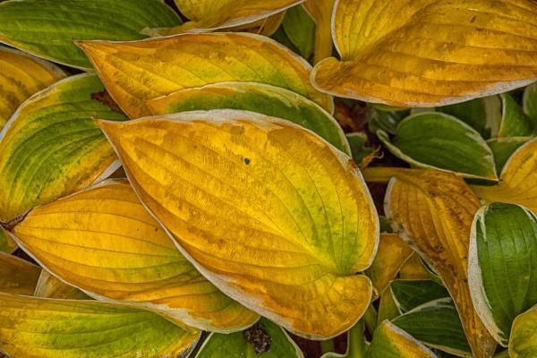 Autumn colours by Leikon
