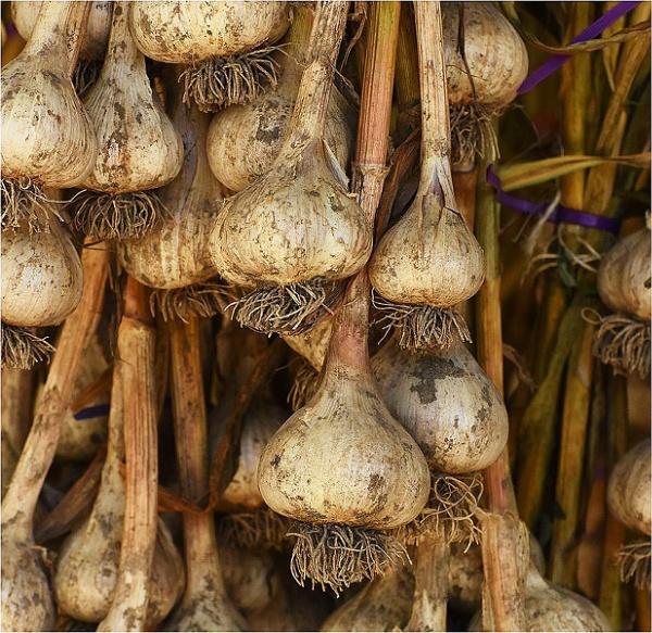 Garlic by MalcolmM
