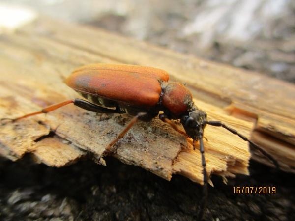 Bug by Inky0studios