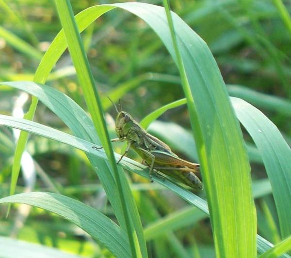 an alien in my garden by sugg