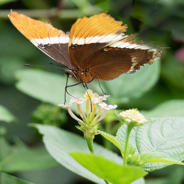 butterfly feeding by ziggy