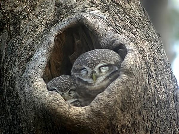 Do not disturb! by TonyDy